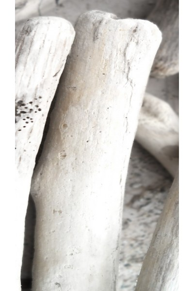 Thick driftwood