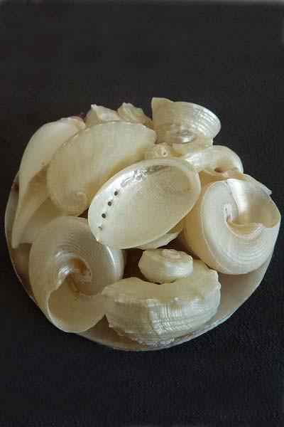 Corbeille de coquillages blancs