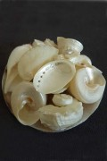 White seashell basket