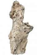 Driftwood bark for wall lamp