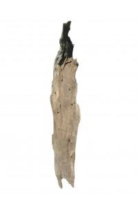 Ecorce en bois flotté