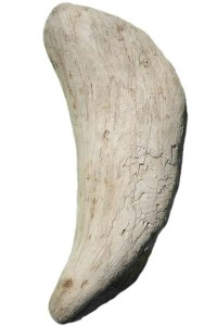 Souche en bois flotté REF PU75