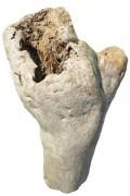 Driftwood PU81