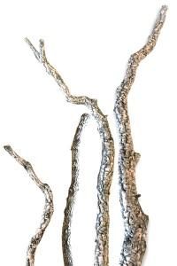 Grandes branches de Chêne liège