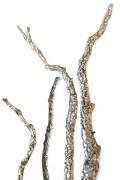 Branches de Chêne liège