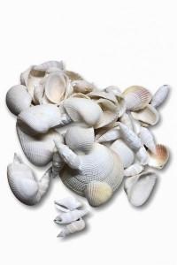 Filet de coquillages blancs