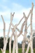 Branches de bois flotté