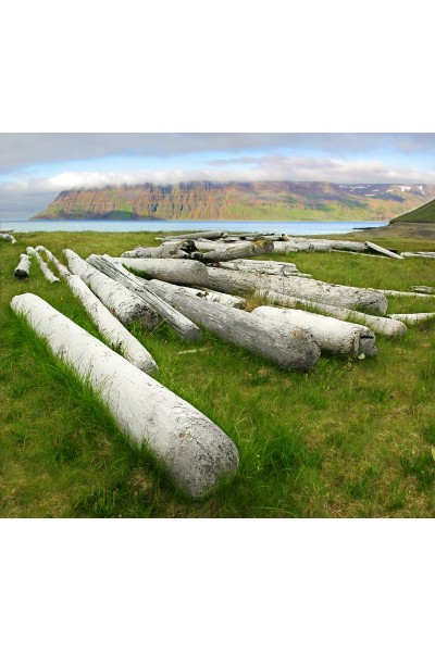 Purchase sale of quality driftwood trunks for Corbeille bois flotte