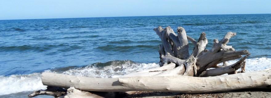 Tronco de madera flotante